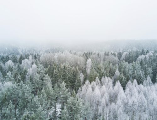 Lebenspflege Wintersonnwende